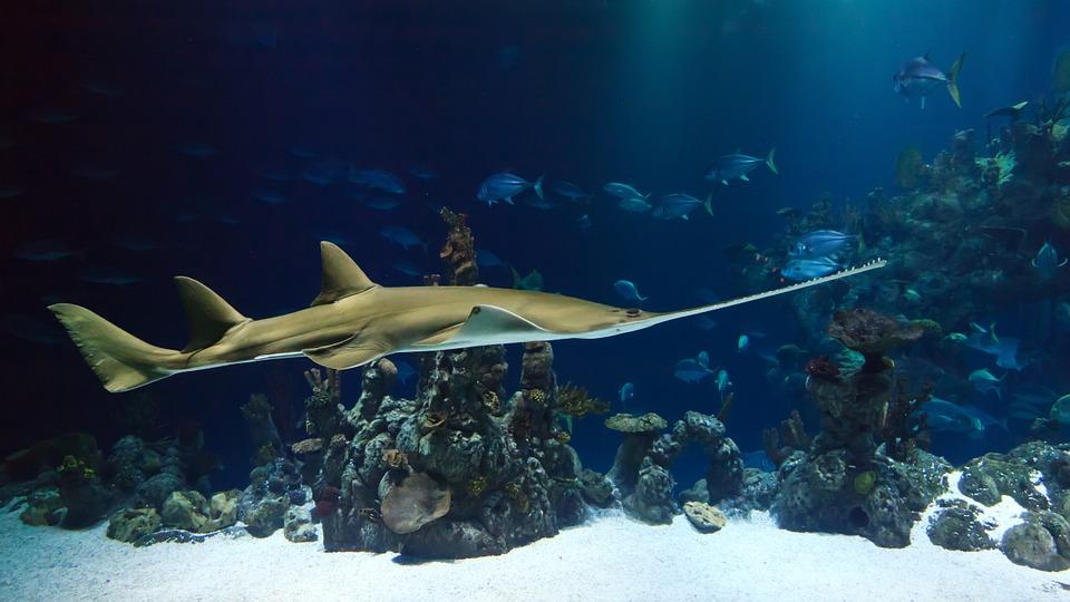 aquarium la rochelle